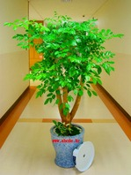 행복나무(해피트리) 3호